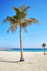 Palm trees on a beautiful beach, summer holidays concept.