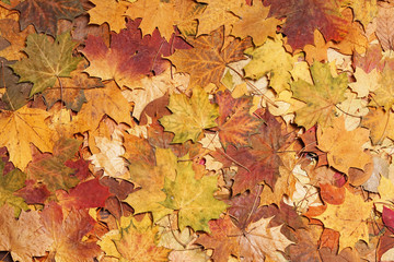 Autumn leaves in forest. Seasonal background.