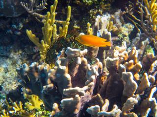 Die indonesiche Unterwasserwelt