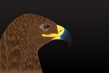 Realistic eagle head on a black background. Vector illustration