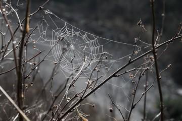 Spider web glistening in the morning dew