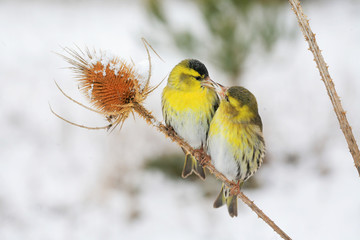 Small birds perched on a branch