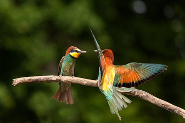 Two humming birds on a branch