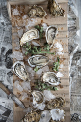 Oysters on crushed ice on a wood surface with a vintage knife  on the side