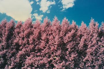 Pink tree wall
