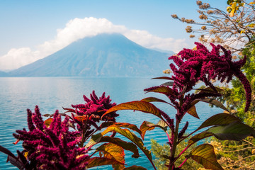 Astounding view of Volcano San Padro with a crown of clouds and blue waters of Lake Atitlan in Guatemala with resplendent tropical red flowers in the foreground.