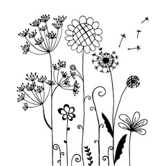 Hand drawn of wind flowers isolated on white.