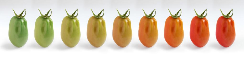 Plum Tomato Ripening