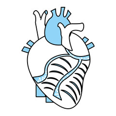 Flat line monocromatic anatomical heart over white background vector illustration