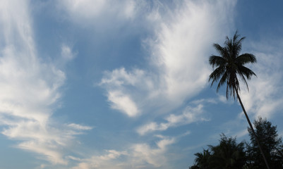 Silhouette of palm trees against the blue sky with clouds