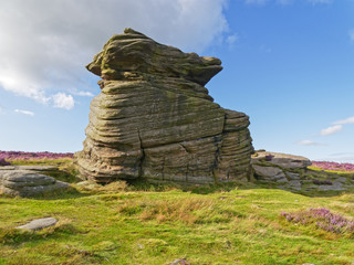 The ancient, weathered, Mother Cap gritstone rock formation stands on Hathersage Moor amidst green ferns and grass and the purple Bell Heather.