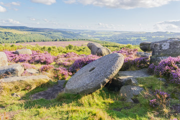 On Hathersage Moor in Derbyshire a large, old, abandoned millstone rests at an angle on a gritstone outcrop, surrounded by grass, ferns and bright purple heather.