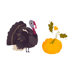 Thanksgiving symbols - farm hen turkey and ripe orange pumpkin, cartoon vector illustration isolated on white background. Cartoon style turkey and orange pumpkin, Thanksgiving decoration elements