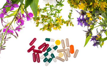 Homeopathy. Herbal capsules, medicinal plants on white backgroun