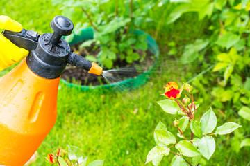 Hand with garden sprayer