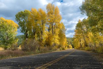 Road during Autumn