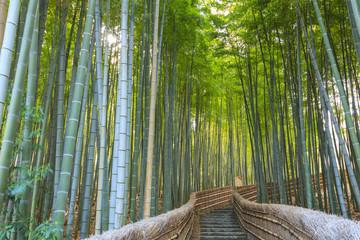 Bamboo Forest, Adashino Nembutsu-ji Temple, Arashiyama, Kyoto, Japan