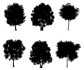 Tree silhouettes set for architectural compositions with backgrounds. Vector illustration
