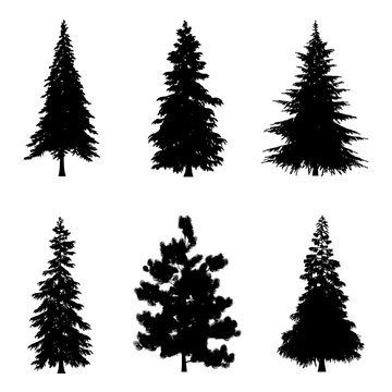 Coniferous trees silhouettes for architectural compositions with backgrounds. Vector illustration