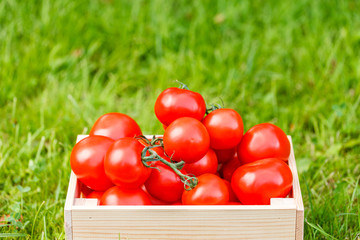 Red tomatoes lie in box