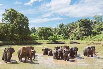Elephant family at Maha Oya - Sri Lanka, Asia