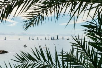 The Sailing yachts near the coast of Monaco