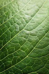 Background pattern of green tree leaf. Macro shot.
