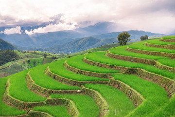 Acrylic Prints Rice fields Green terrace rice field with mountain background