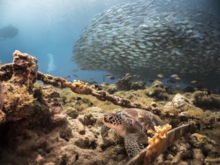 Unterwasser - Riff - Schildkröte - Fischschwarm - Tauchen - Curacao - Karibik
