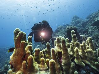 Unterwasser - Riff - Koralle - Taucher - Tauchen - Curacao - Karibik