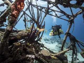 Unterwasser - Riff - Wrack - Flugzeugwrack - Taucher - Tauchen - Curacao - Karibik