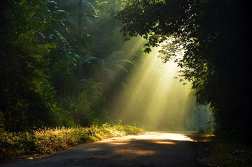 Morning sun light rays piercing through the trees