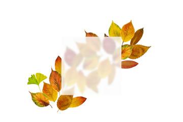 スリガラス越しのカラフルな枯葉