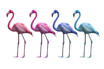 colorful of flamingo isolated on white background