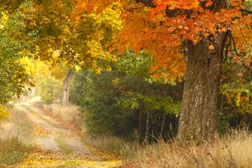 Autumn road./ Kashubia,Poland