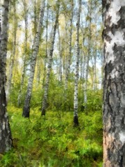 Tall slender white birch forest.  Russian spring landscape watercolor illustration. photo manipulation concept.