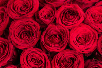 Texture of red roses