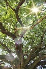 Old big tree branch Kanchanaburi natural park