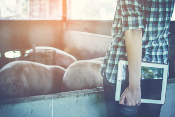 woman farmer working on check and manage pig farm
