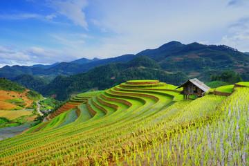 Ruong Bac Thang - Yen Bai