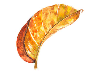 Dry leaf on white, watercolor hand painting, botany art, can be used for home decorate