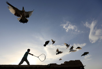 A man wields a stick as his flock of domesticated pigeons fly atop the roof of his house in Nangarhar province