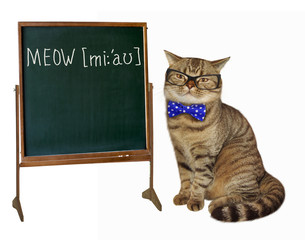 The cat is an English teacher. White background.