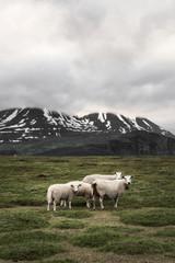 Road trip in the Lyngen Alps, Tromsø region, Norway