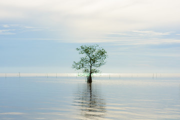 Lonely tree in lake with sunrise, silhouette