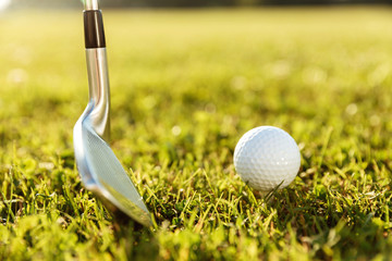Golf club and a ball in green grass