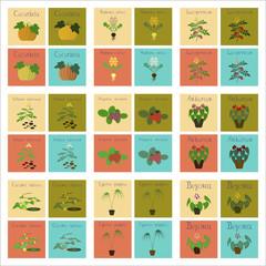 assembly of flat Illustrations Cucurbita raphanus tomato Solanum Cyperus Ficus Cucumis Anthurium Fragaria Begonia