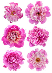 Pink peony set