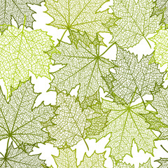 Seamless summer background and leaves of a maple