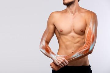 Anatomy of human arm.